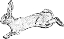 Agile Rabbit logo