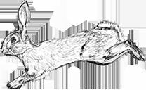 Agile Rabbit logo